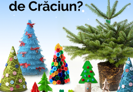 Ce brad de Crăciun alegi anul acesta?