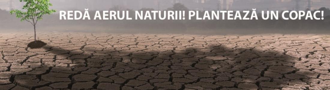 Daikin redă aerul naturii alături de Plantăm fapte bune în România