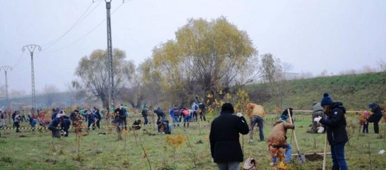 S-au plantat fapte bune în perdeaua de protecție forestieră de la Sînmihaiu Român