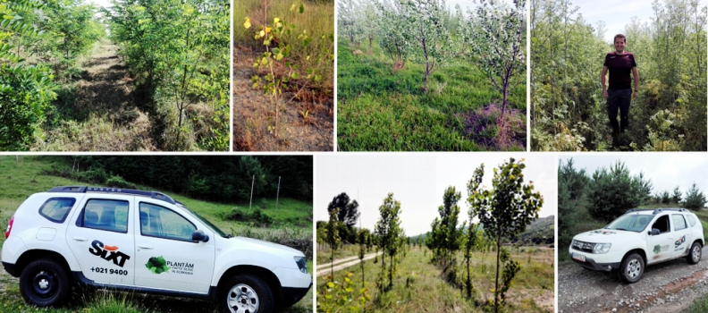 Pădurile noastre – o imagine de ansamblu a acțiunilor Plantăm fapte bune în România