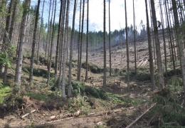 România riscă decimarea pădurilor