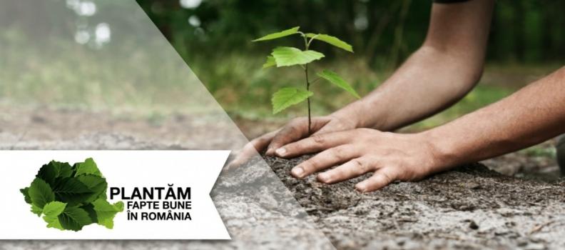 Verde la împădurire! Ia parte la inițiativa SomProduct de reîmpădurire!
